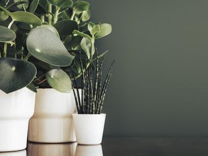 How Houseplants Can Benefit Your Health